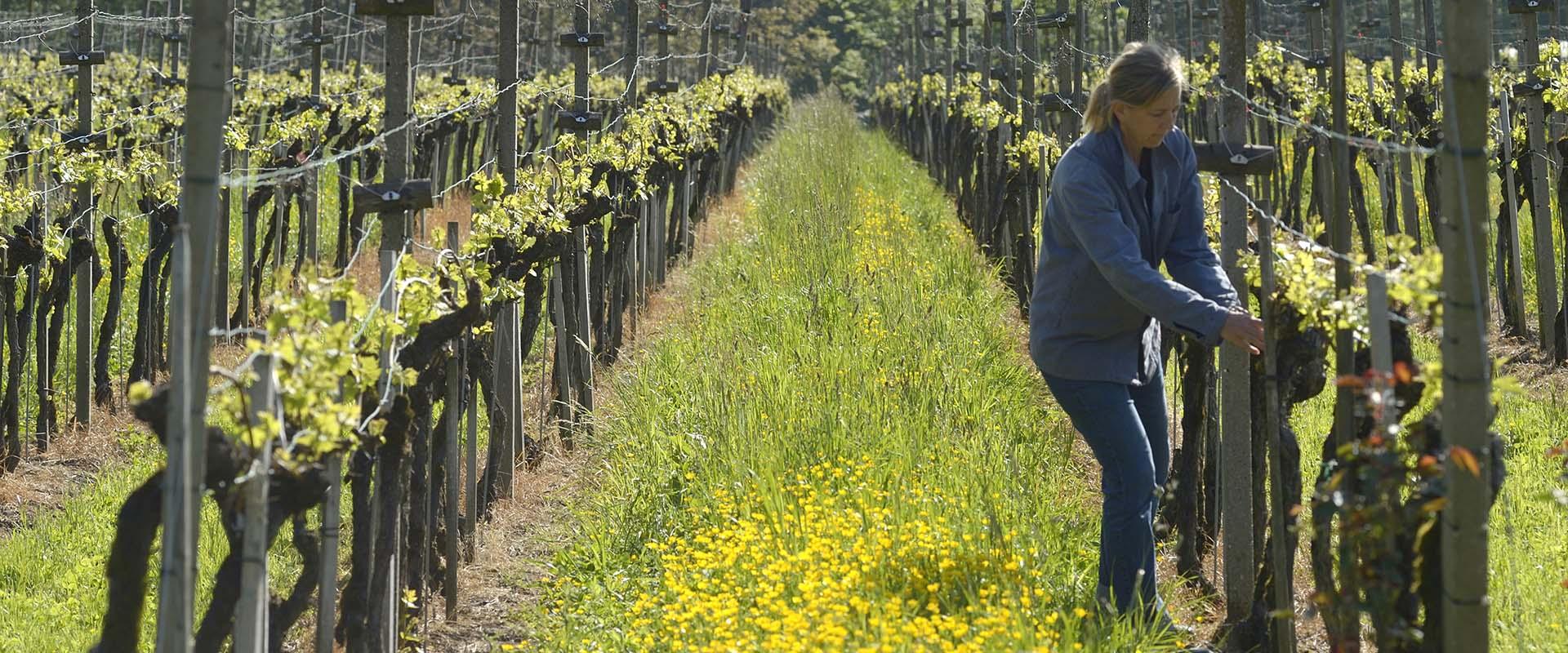 Weingut Rütihof - Monat Mai