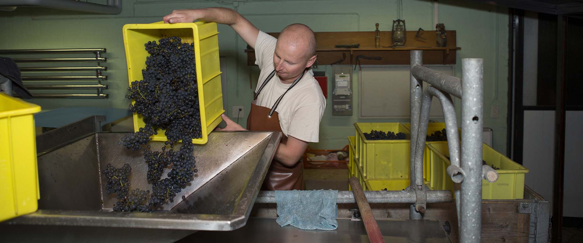 Weingut Rütihof - Monat Oktober